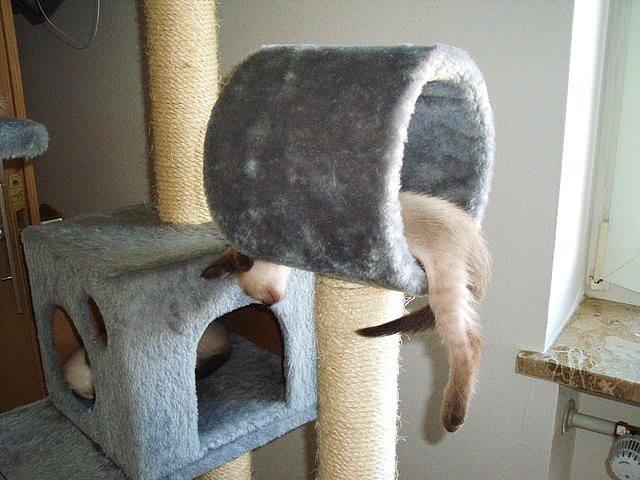 Домик для кошки своими руками: 4 мега-идеи