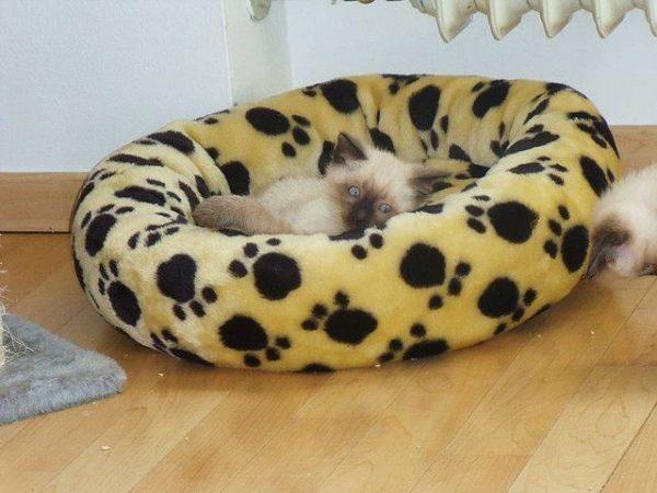 Мягкий домик для кота