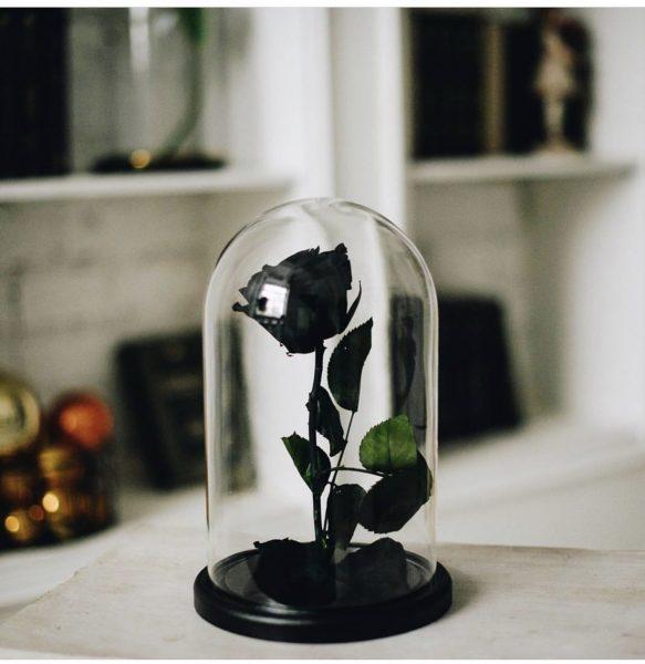 Черная роза в колбе