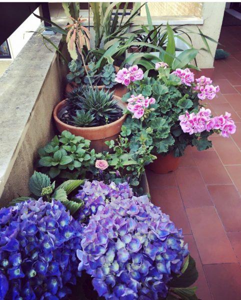 Как украсить балкон цветами фото