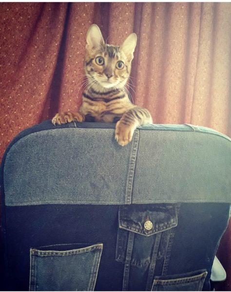 Чехол на кресло из джинсов